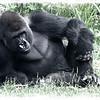 Zoo Trip Summer 2012 :